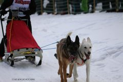 Todtmoos2007_Greylikewolves100.jpg