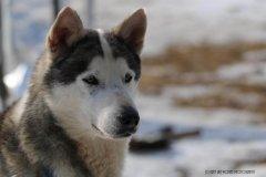 Todtmoos2007_Greylikewolves105.jpg