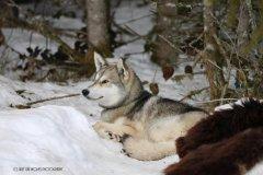 Todtmoos2007_Greylikewolves66.jpg