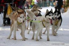 Todtmoos2007_Greylikewolves91.jpg