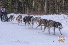 Internationales_Schlittenhunderennen_Todtmoos_20_von_49.jpg
