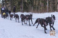 Internationales_Schlittenhunderennen_Todtmoos_21_von_49.jpg