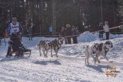 Internationales_Schlittenhunderennen_Todtmoos_49_von_49.jpg